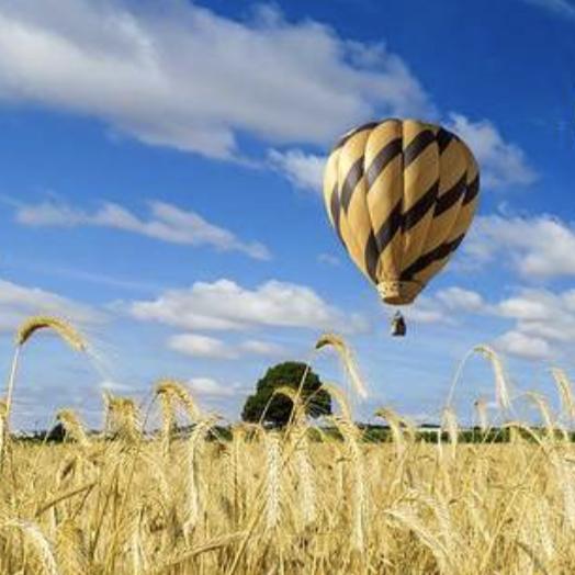 Montgolfière en vol au dessus d'un champs de blé